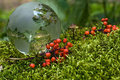 Free Crystal-clear Globe On Green Moss Stock Images - 24025524