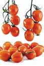 Free Cherry - A Tomato Grape Royalty Free Stock Photo - 24027885