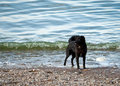 Free Black Dog And Water Royalty Free Stock Photography - 24028697