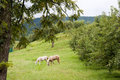 Free Two Horses Grazing Near An Apple Orchard. Stock Photo - 24029420