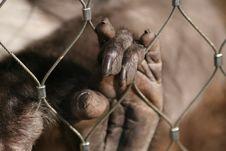 Free Monkey Hand Stock Photo - 24022470
