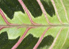 Free Leaf Stock Photos - 24025783