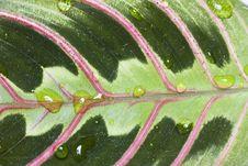 Free Leaf Texture Stock Photos - 24025803
