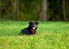 Free Black Dog On Grass Stock Photo - 24028880