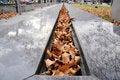 Free Autumn Leafs Stock Photos - 24035823