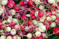 Colorful Radishes Stock Images