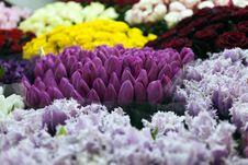 Free Flowers Market Stock Photography - 24034652