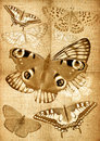 Free Grunge Canvas Back With Butterflies Royalty Free Stock Photo - 24040795