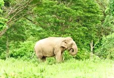 Free Asian Elephant Stock Image - 24043161