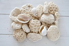 Free Collection Of Shells And Coral Royalty Free Stock Photography - 24049447