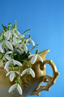 Free Snowdrops In A Retro Vase With Blue Background Stock Photos - 24049693
