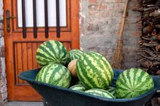 Free Water Melons Royalty Free Stock Photography - 24050727