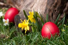 Free Easter Hunt Royalty Free Stock Photography - 24056017