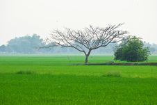 Scenery Of Rice Fields Stock Photos
