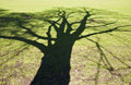 Free Tree Shadow Royalty Free Stock Images - 24072709