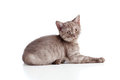 Free Little Cat Pure Breed Striped British Stock Photo - 24074960