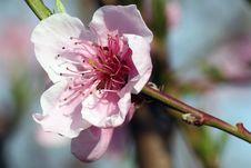 Tree Flower Stock Photography