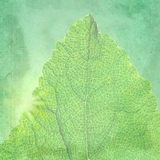 Free Green Vintage Background With A Texture Leaf. Royalty Free Stock Photography - 24078927