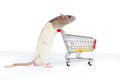 Free Domestic Rat Pushes Shopping Cart With Cheese Royalty Free Stock Images - 24084589