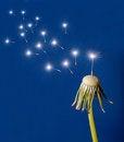 Free Dandelion Seed Shine On Blue Stock Image - 24088521