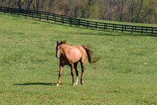 Free Horse Farm Royalty Free Stock Image - 24081806