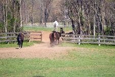 Free Horses Stock Image - 24081821