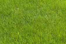Free Grass Background Royalty Free Stock Photo - 24082165