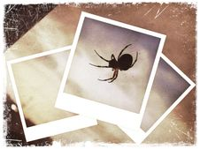 Free Polaroid Collage Of Spider Stock Photos - 24084163