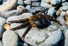 Free Crab On A Rock. Stock Image - 24088811