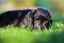 Free Cute Puppy Looking In Camera Stock Photos - 24090663
