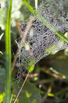 Free Spider Web Stock Photography - 24094202