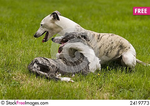 Free Playing Dogs Stock Photos - 2419773