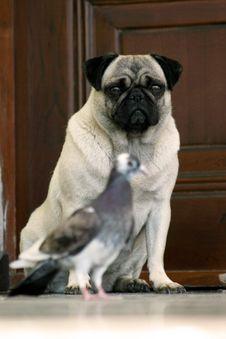 Free Dog Stock Photo - 2410790