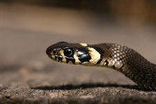 Free Detail Of Snake Stock Images - 2412304