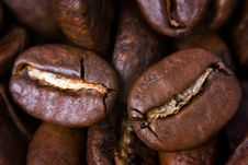 Free Coffee Seeds Stock Images - 2412474