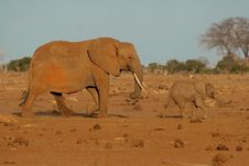 Free Elephant Mother And Calf Royalty Free Stock Photography - 2412817