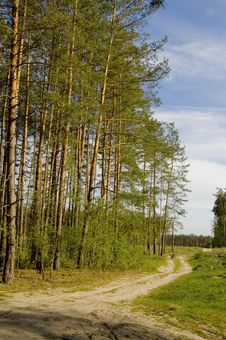 Free Road In Forest Royalty Free Stock Photos - 2413198