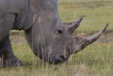 Free White Rhino Stock Photos - 2413213