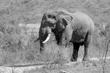 Free Elephant. Stock Images - 2413394