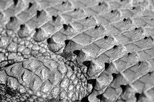 Free Abstract Crocodile. Stock Image - 2413531