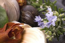 Free Herbs And Spices Stock Image - 2417831