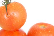Free Tomatoes On White - Wet Royalty Free Stock Image - 2419666