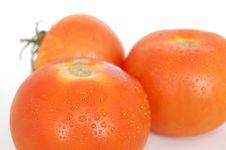 Free Tomatoes On White - Wet 10 Stock Photo - 2419670