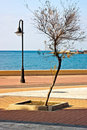 Free Lonely Tree Royalty Free Stock Photography - 24108687
