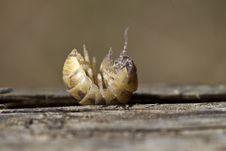 Free Pill Bug Stock Photography - 24100242