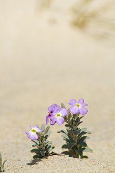 Free Beach Dune Flora Stock Photo - 24101480