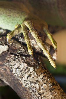 Free Iguana Lizard Claw Stock Image - 24103951