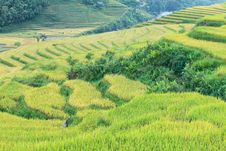 Free Rice Terraces In The Mountains Royalty Free Stock Image - 24107346