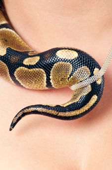 Small Python And Necklace Royalty Free Stock Photography