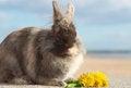 Free Bunny Royalty Free Stock Photos - 24112848